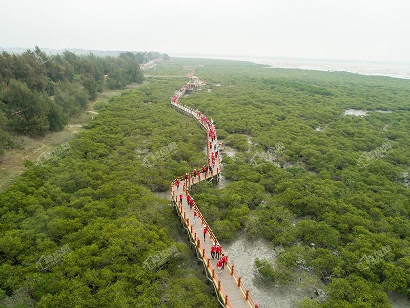 红树林.jpg
