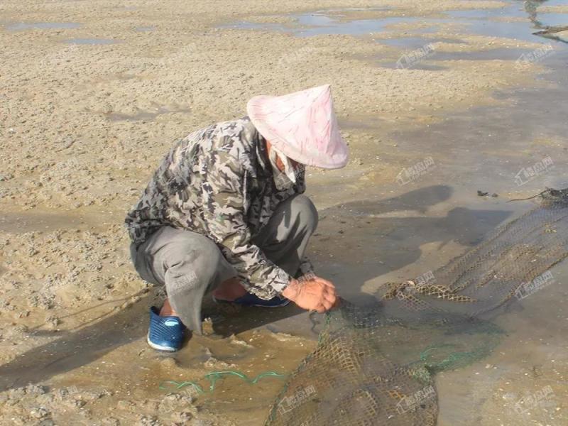 碧桂园北海阳光 大海的馈赠——阳光红树林趣味赶海记_北海楼盘网